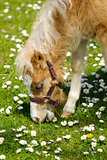 Horse foal eating grass