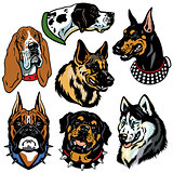 dogs heads set