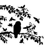 Birds mobbing owl