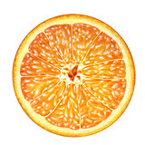 juicy orange cross section , transection of orange on white background , fruits
