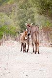 donkeys in field outdoor in summer looking