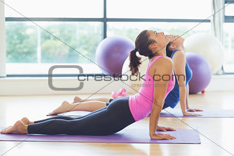 Fit women doing the cobra pose in fitness studio