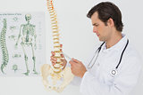 Serious male doctor looking at skeleton model