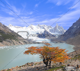 Small tree by laguna Torre.