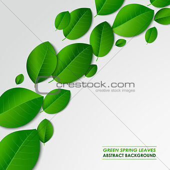 Abstract green spring leaves background