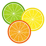 Colorful citrus slices set
