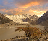 Small tree by laguna Torre and Cerro Torre mountain.