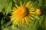 Herbal Medicine - horseheal