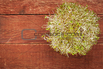 alfalfa and radish sprouts