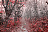 Red leaves forest