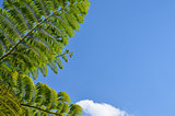 Tropical fern tree branch