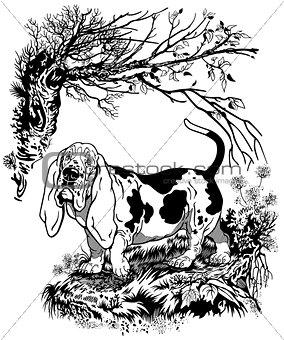 basset black white illustration