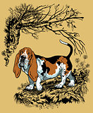 basset hound in forest
