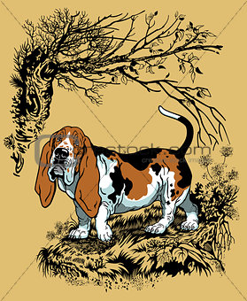 basset hound in forest