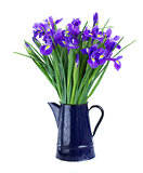 blue irises in flower pot