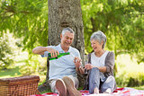 Cheerful senior couple having champagne at park
