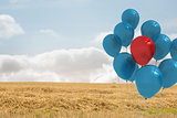 Balloons above a field