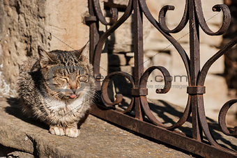 Cat with tongue sticking out