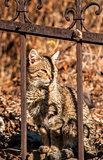 Cat behind iron fence