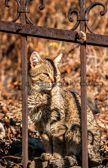Cat behind iron fence