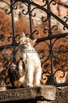 Alley cats on iron fence