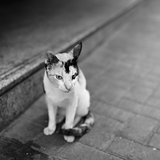 Lonely cat at street