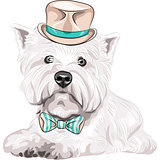 vector dog West Highland White Terrier breed in hat and bow tie