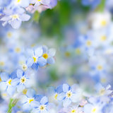 Fantasy Gentle Spring  Background / Blue Flowers Defocused
