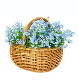 Bouquet of blue spring flowers in basket on white background