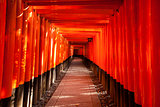 Walkway Between Torii Gates