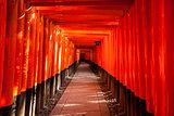 Walkway Between Torii Gates