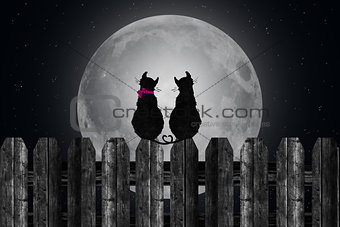 cats on fence in moonlight