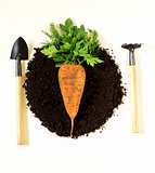concept of natural and organic foods - carrots and greens on the ground
