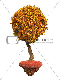 Autumn Tree Isolated on White Background.