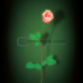 abstract dark background with red rose on green