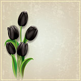 abstract grunge background with black tulips