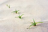 Green seedling on beach