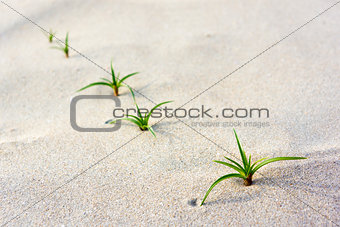 Green seedling on beach