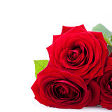 beautiful red rose on white bachground isolated