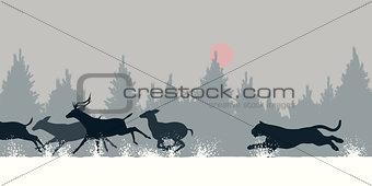 Tiger chasing deer