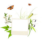 Summer frame with photo, green leaves, flowers and insects