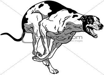 greyhound black white