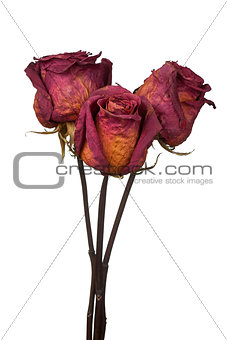 three dried roses on white