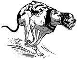 racing greyhound black white