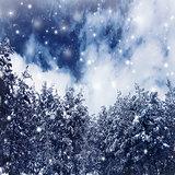 Winter forest border