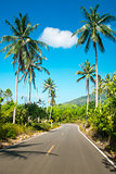 Nice asphalt road with palm trees