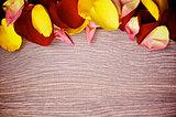 Frame of Rose Petals