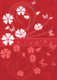 sakura blossom, red background