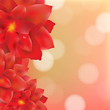 Red Flower With Water Drops Bokeh