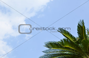 Branches of palm tree
